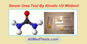 serum urea test